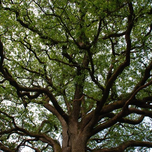 qi-gong-de-l-arbre